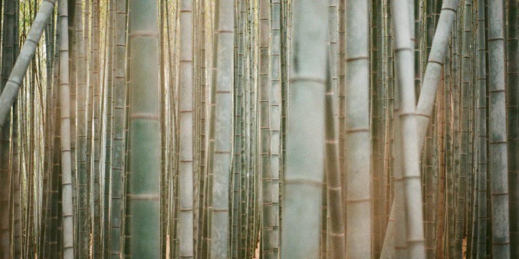 Zero aste toothbrushes: Bamboo plants